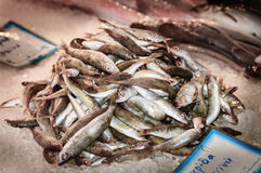 Fresh herrings Royalty Free Stock Photography