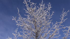 Fresh hoarfrost on tree branches nature background. Fresh hoarfrost on tree branches -nature background stock video