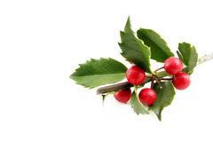 Fresh Holly Stock Images