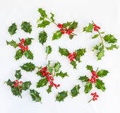 Fresh holly with red berries for design elements Stock Photography
