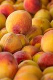 Fresh Home Grown Peaches Stock Photo