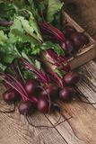 Fresh beetroots on rustic table. Fresh homegrown beetroots on wooden rustic table, harvest time, organic farm Royalty Free Stock Images