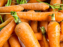 Fresh homegrown carrots Royalty Free Stock Images
