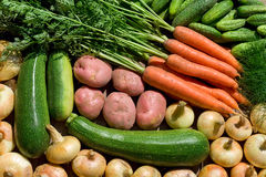 Fresh homegrown vegetables Stock Images