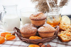 Fresh homemade apricot muffins royalty free stock photography