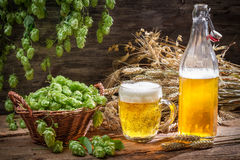 Fresh homemade beer made of hops stock photo