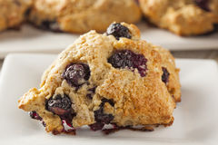 Fresh Homemade Blueberry Breakfast Scones Royalty Free Stock Image
