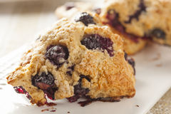 Fresh Homemade Blueberry Breakfast Scones Stock Photography