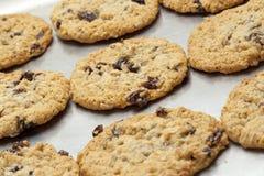 Fresh homemade cookies on baking sheet Royalty Free Stock Image