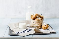 Fresh homemade cupcakes with raisins, powdered sugar and milk. On blue wooden table Royalty Free Stock Images