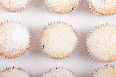 Fresh homemade Muffin on white background Royalty Free Stock Photo