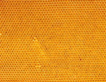 Fresh honey in comb Stock Image