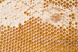 Fresh honey in comb Royalty Free Stock Photos
