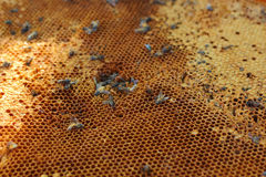 Fresh honey in the comb - background Stock Images