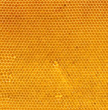 Fresh honey in comb natural texture Royalty Free Stock Photography