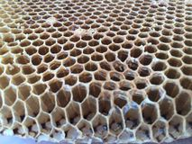 Fresh Honey Combs Royalty Free Stock Photo