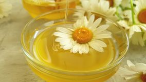 Fresh honey nutrition daisy slow motion delicious summer delicious flower on gray concrete background stock footage