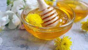 Fresh honey dripping organic blooming apple tree slow motion stock video footage