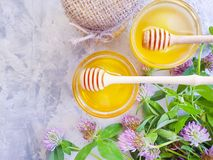 Fresh honey refreshment flower clover. Fresh honey flower clover   refreshment stock photo