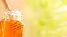 Fresh honey healthy food / Close up of sweet honey in jar with wooden dipper royalty free stock photography
