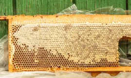 Fresh honey in honeycomb Royalty Free Stock Images