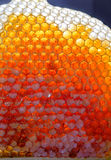 Fresh honey in honeycombs Royalty Free Stock Images