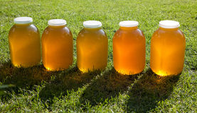 Fresh honey jars Royalty Free Stock Photos