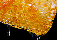 Fresh honey.JH Stock Photo