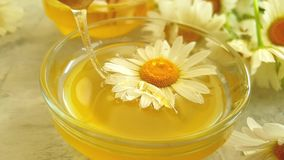 Fresh honey nutrition daisy dripping slow motion  summer delicious flower on gray concrete background stock video