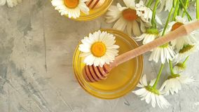 Fresh honey nutrition daisy slow motion summer delicious flower on gray concrete background stock footage
