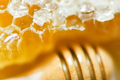 Fresh honey and wooden dipper honey Close up macro of yellow sweet honeycomb natural healthy food. Fresh honey and wooden dipper honey / Close up macro of yellow stock photography