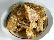 Fresh honeycomb Stock Image