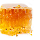 Fresh Honeycomb and bee pollen. close up Stock Images