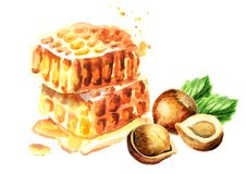 Fresh honeycomb and hazelnut. Watercolor hand drawn illustration stock illustration