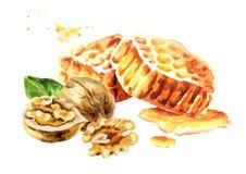 Fresh honeycomb and walnut. Watercolor hand drawn illustration. Stock Photography