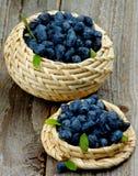 Fresh Honeysuckle Berries Stock Photos