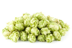 Fresh hop Royalty Free Stock Photography
