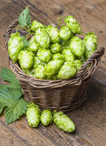 Fresh hop Stock Photography