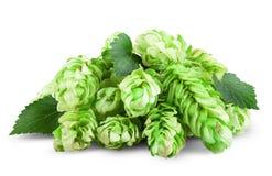 Fresh Hop Stock Image