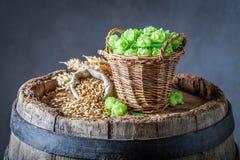 Fresh hop and malt on old barrel. Fresh hop and malt on old wooden barrel royalty free stock photography