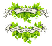 Fresh hop plants with green leaves and outline ribbons vector Royalty Free Stock Image