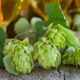 Fresh hops Stock Photos