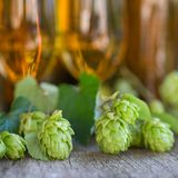 Fresh hops Stock Photos