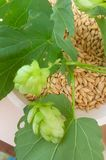 Fresh hops and malt for your beer. Fresh and green hops plant and dry malt for beer, fresh and refreshing stock image