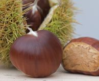 Fresh horse chestnuts Royalty Free Stock Photography