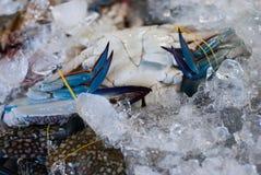 Fresh Horse crab. On ice at sea market Stock Photos
