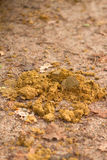 Fresh horse manure on a country path Stock Photos