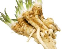 Fresh horseradish Royalty Free Stock Photo