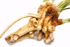 Fresh horseradish Stock Image