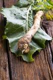 Fresh horseradish Royalty Free Stock Images